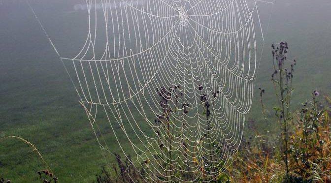 Spinnweben im Herbst