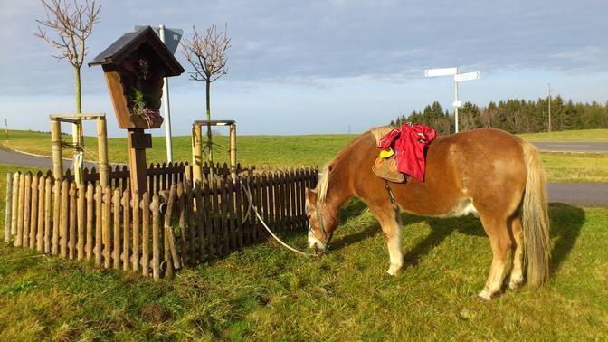 Das Pony ist startklar für eine Wanderunge auf den Buch