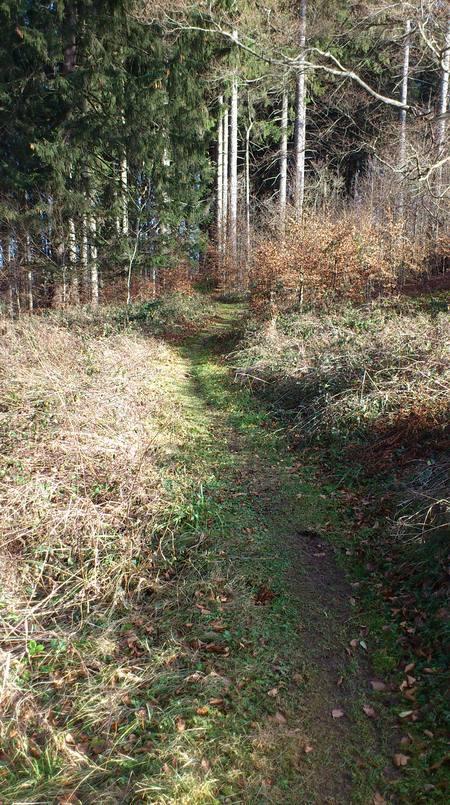 Ein schöner Pfad durch den Buchenwald