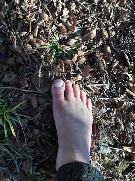 Bucheckern ärgern die baren Füße