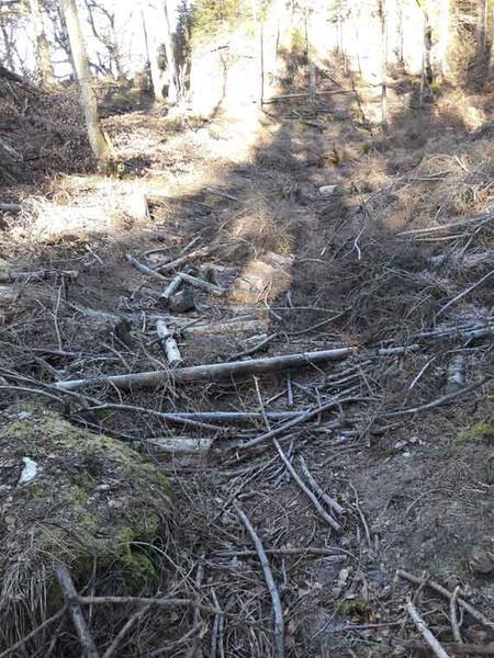 Ein gerodetes Stück Wald