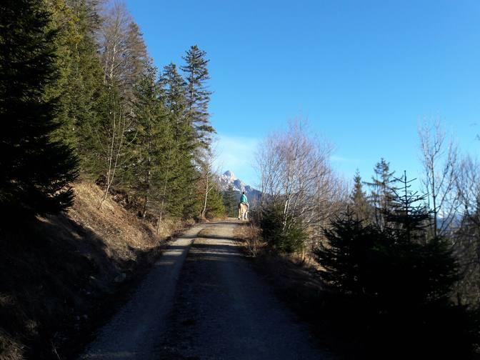 Reiterin auf einem Forstweg