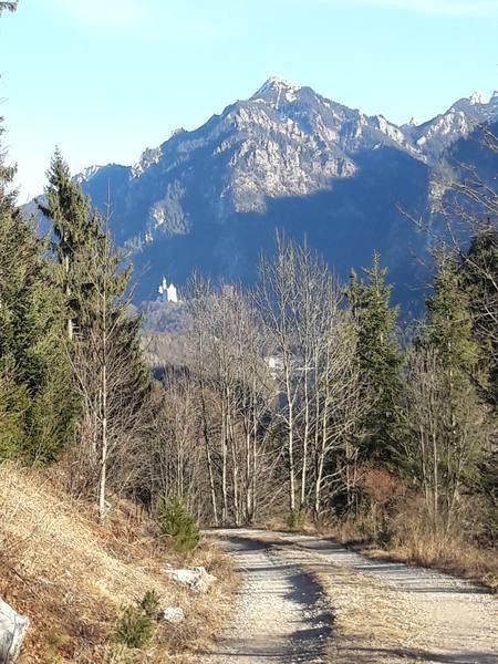 Blick zum Schloss Neuschwanstein