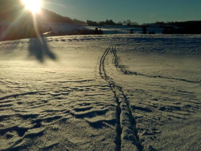 Spuren-im-Schnee-im-Nachmittagslicht