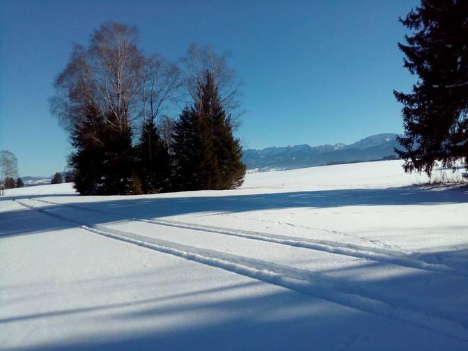 Zwischen-Bäumen-ein-Blick-zu-den-Alpen