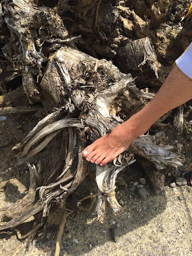 Plädoyer für die Füße
