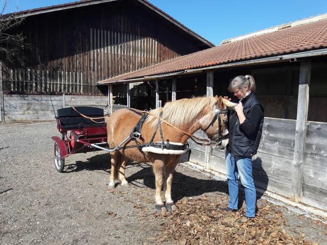 Der Pony für das Pony