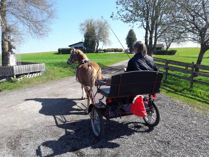 Ausfahrt mit dem Pony-Gig