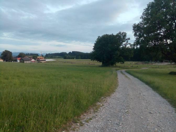 Die Weiden des RiverTrail
