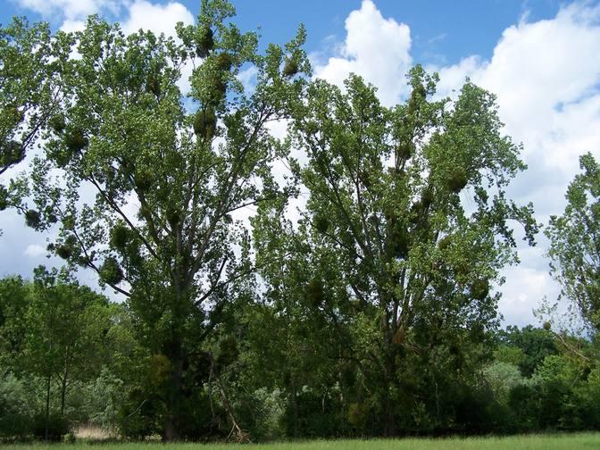Baum 3
