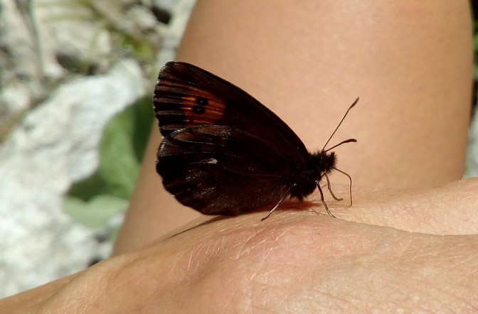Schmetterling am Vilsalpsee