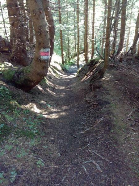 Barfußfreundlicher Waldweg