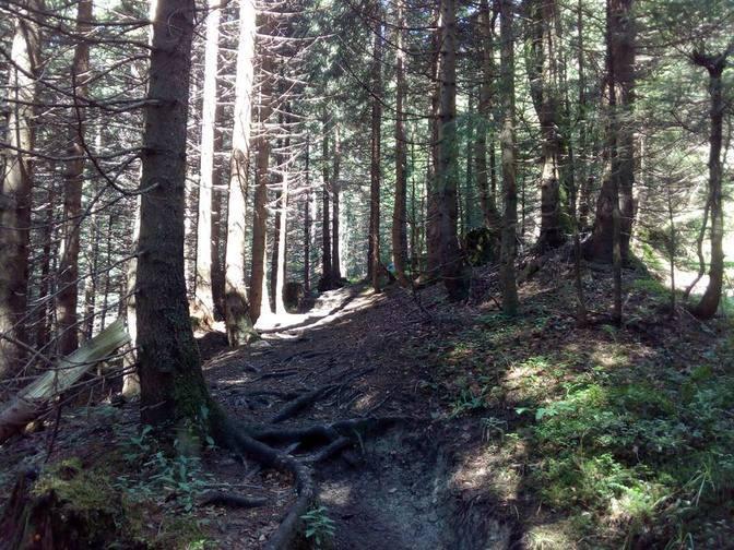 Barfußfreundlicher und romantischer Waldpfad