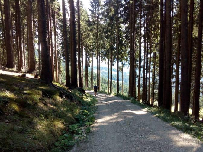 Noch einmal laufen wir barfuß einen geschotterten Forstweg entlang