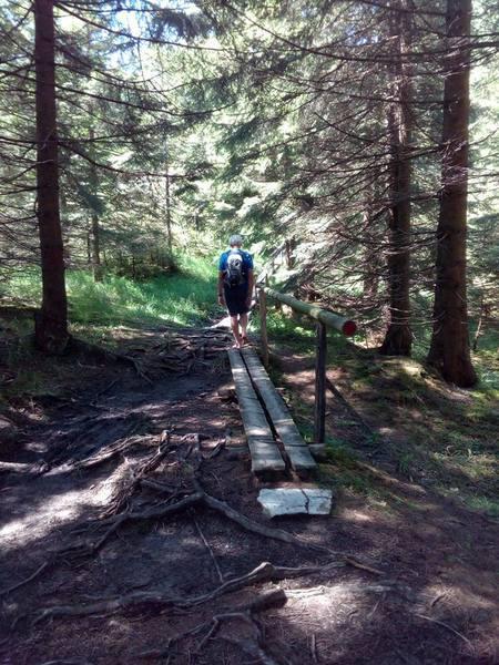 Brettleswege führen über feuchte Waldstücke