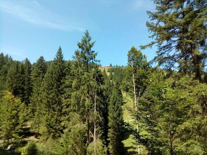 Wir sehen schon die Kappeler Alp oben auf dem Berg liegen
