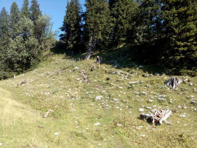 Wolfgang beim Abstieg vom Alpspitzgipfel durchquert eine steinige Alm