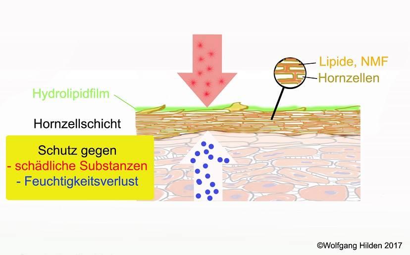 Feuchtigkeits- und Fettversorgung der Haut