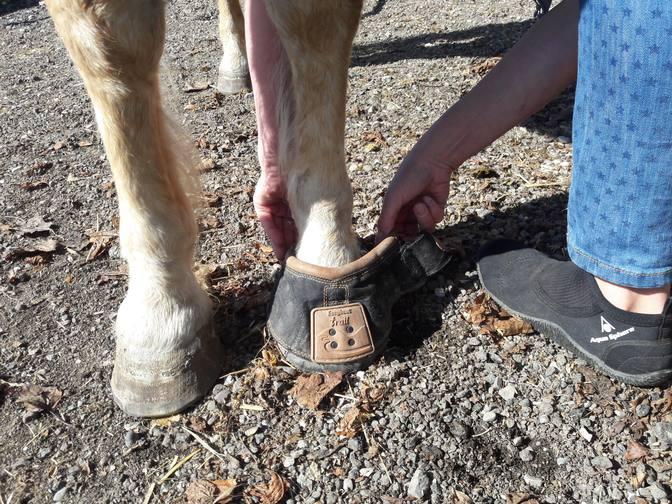 Hufschuhe Easy Boot Trail für unser Pony