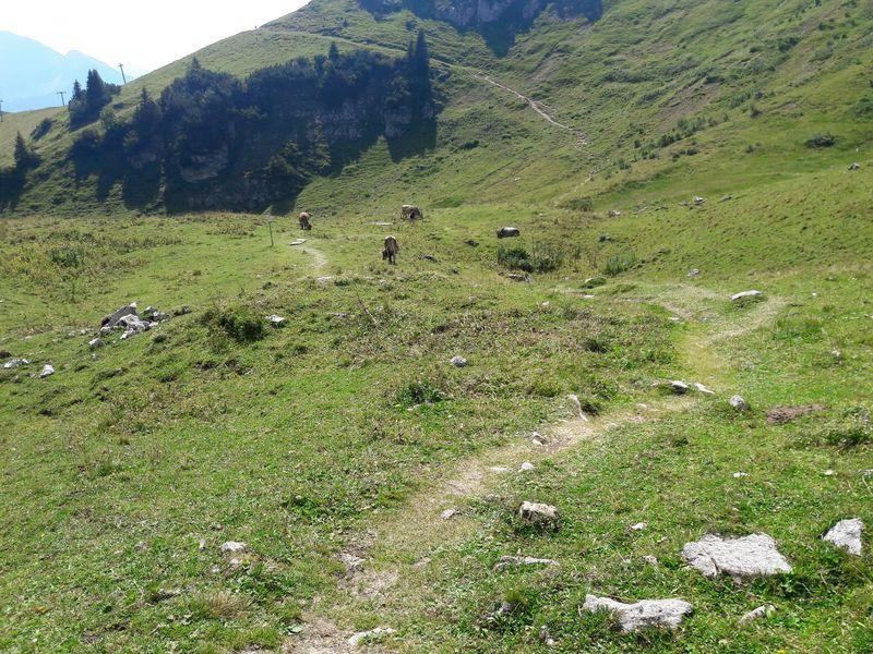 Der Graspfad windet sich durch die Almlandschaft
