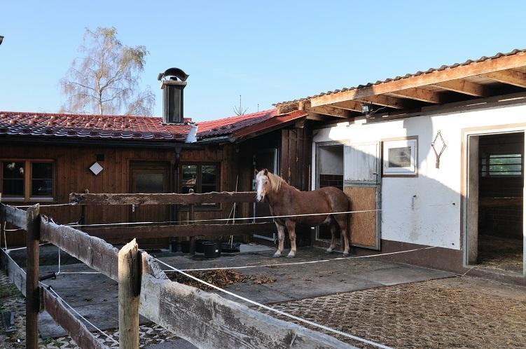 Das Pony steht am Haus