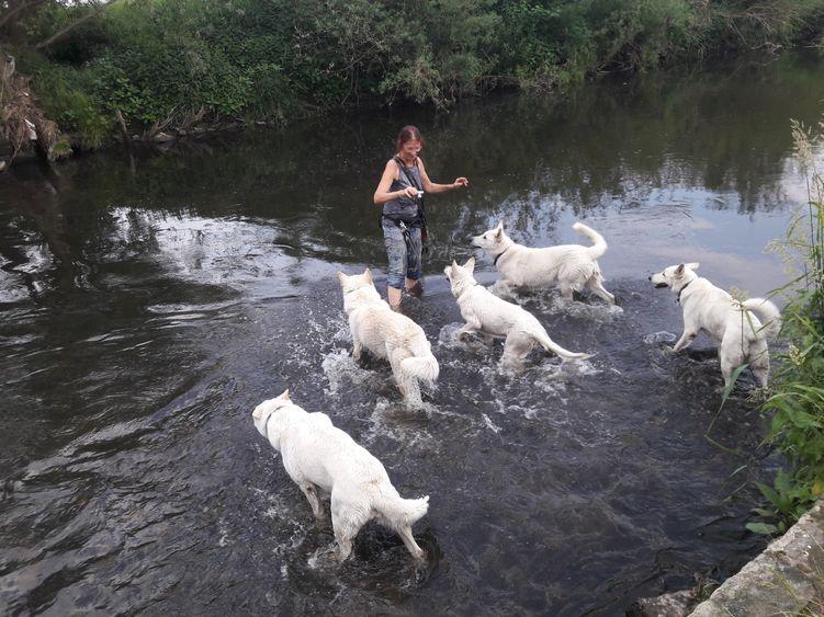 Sabine mit ihren weißen Schäferhunden