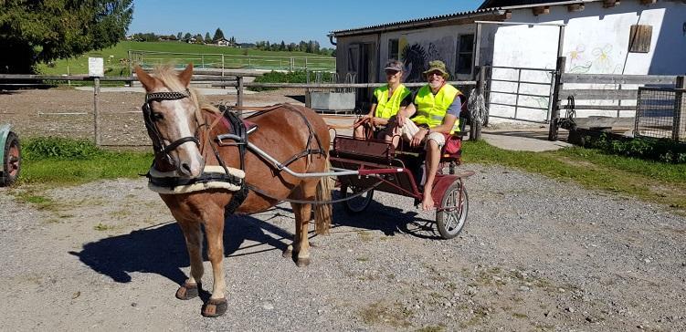 Gigfahrt mit Pony