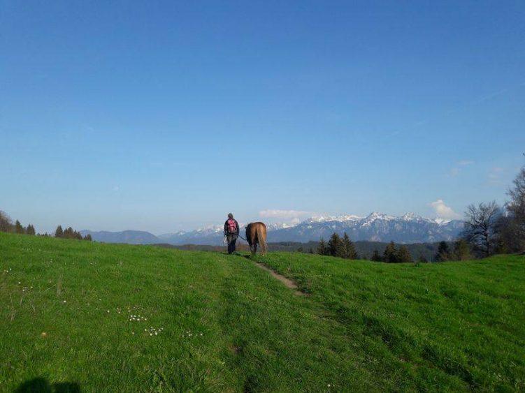 Wanderung über die Alm mit dem Pony