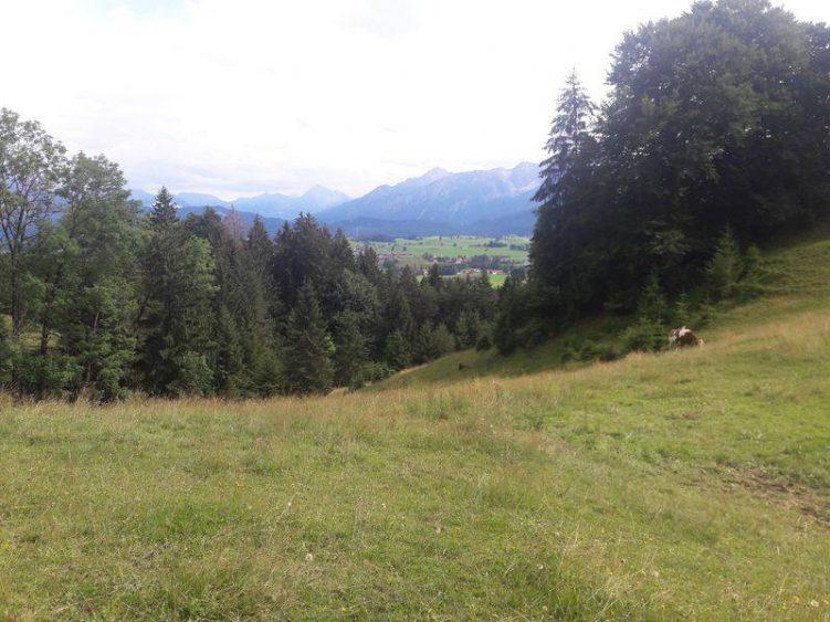 Blick auf Wiesen, Rinder und Berge