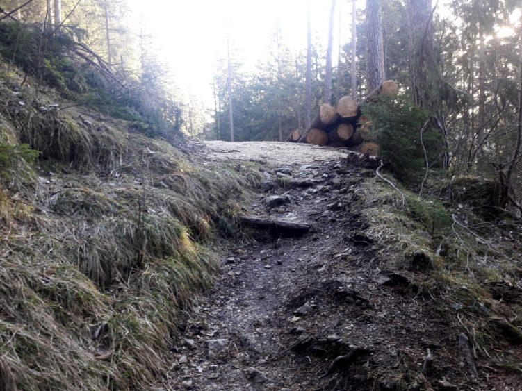 Waldpfald trifft Schotterpiste
